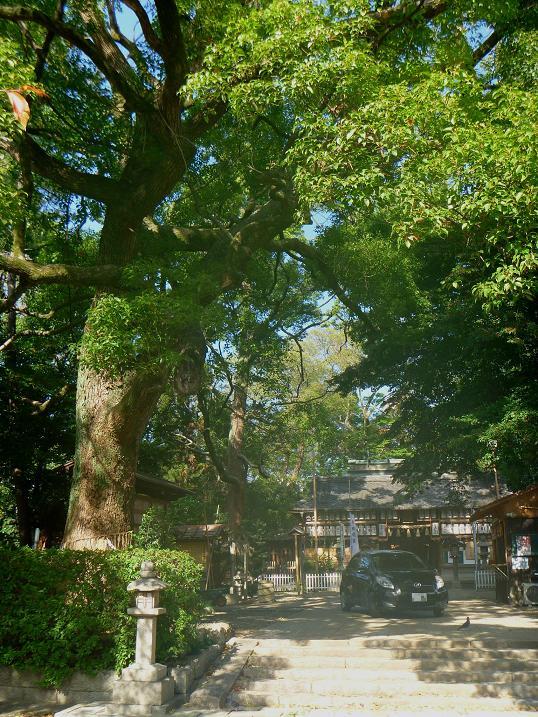 羽束師神社 (1)