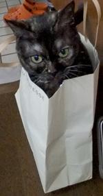おネコとペーパーバッグ
