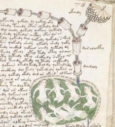 Voynich-Page-78r.jpg