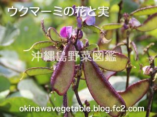 藤豆,フジマメ