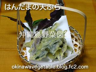 ハンダマ,水前寺菜