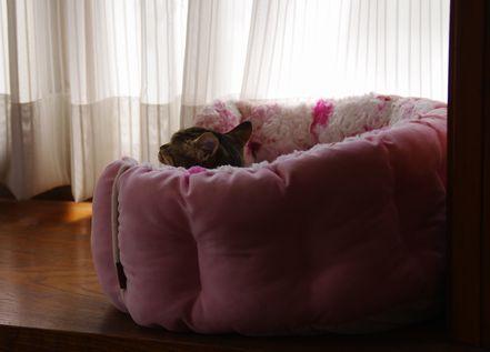 ベッドに?