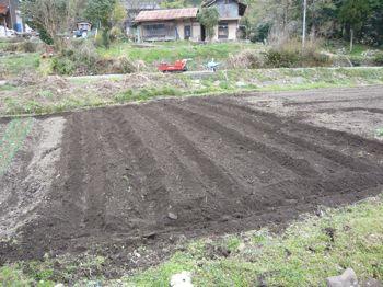 ジャガイモ畝立て完成