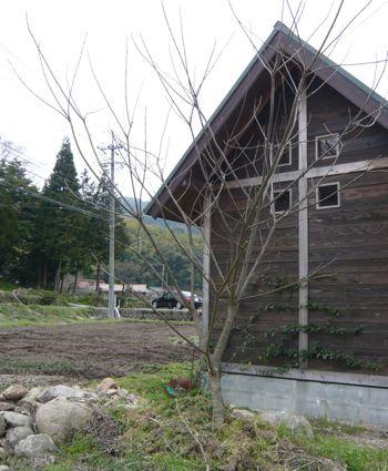小屋後ろの木