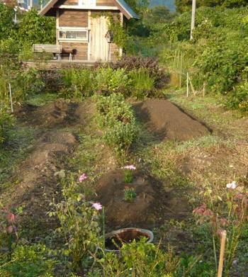 アネモネ植える場所