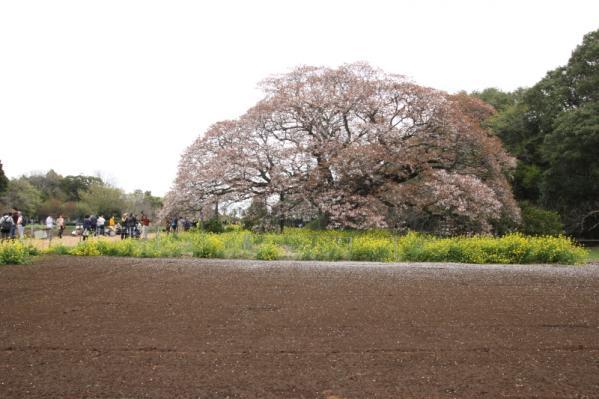 DPP_hitachinaka212.jpg