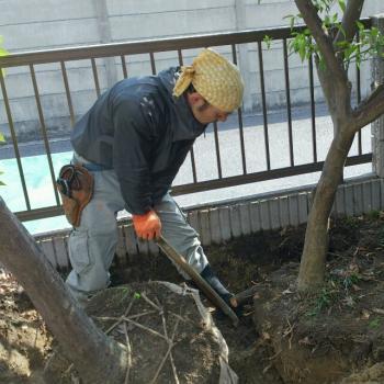 岩田邸既存樹掘り取り