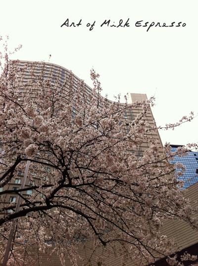 Hilton_Tokyo.jpg