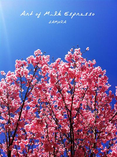 sakurasakura_2.jpg