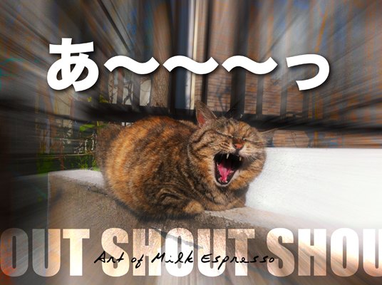 shout!.jpg
