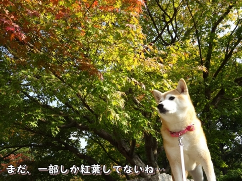 036_201311182336080da.jpg