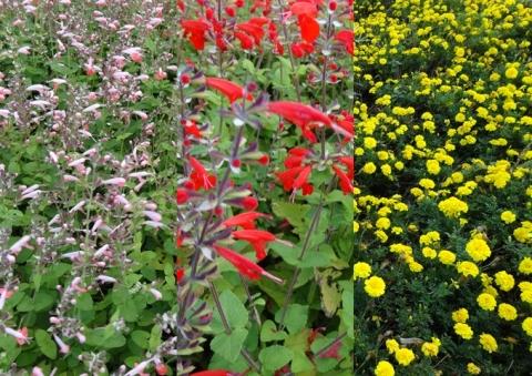 色とりどり~な植物