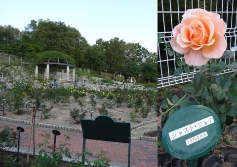 鶴見薔薇園2