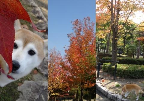 鶴見緑地 紅葉 日和