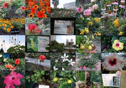 咲くや この花館 2