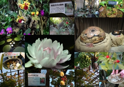 咲くやこの花館 3