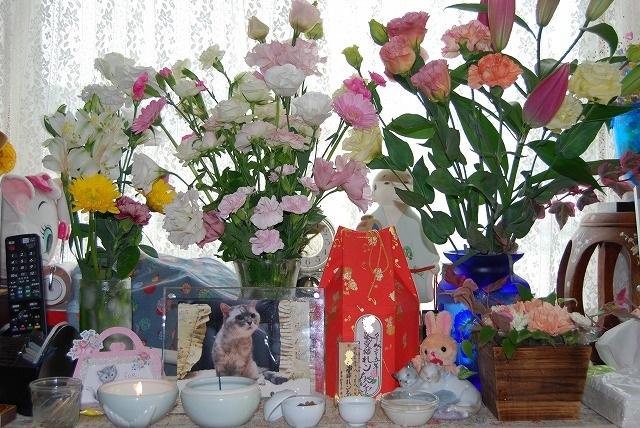 れンちゃん周りのお花