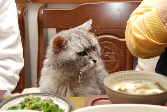 れンちゃんの食べたいものはないの