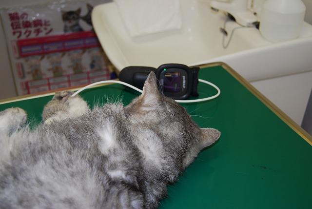 ただ今血圧測定中