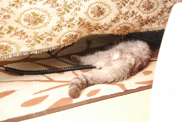 ベッドの下で