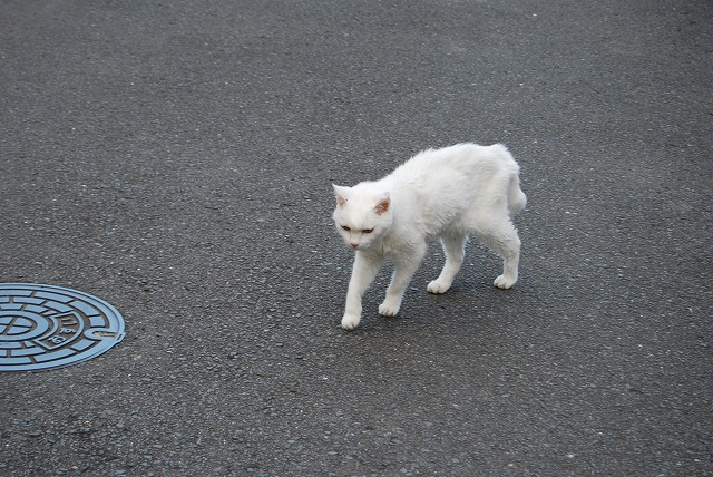 cat walking1