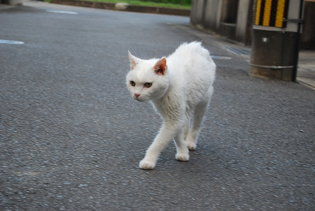 cat walking2