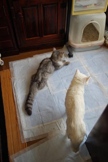 おトイレ 行った?