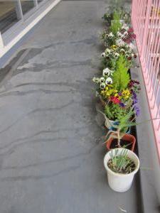 ブログ用、花の並びjpg