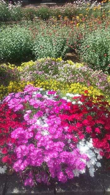 小さい花々