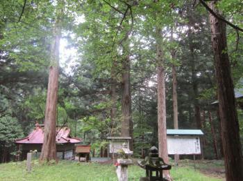 林の中の神社