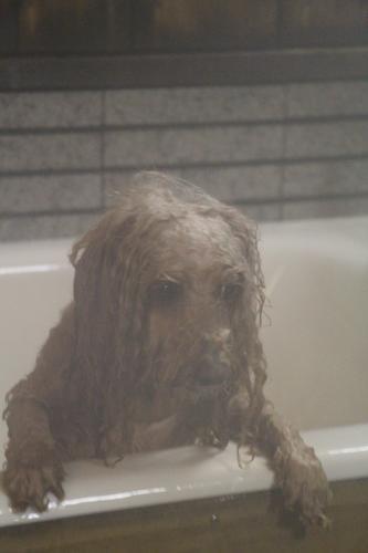 わんパラ高山 わん風呂