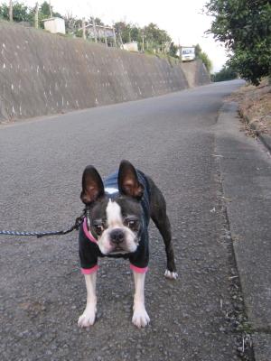 ミカン山散歩コース