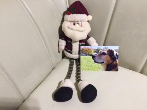 サンタ人形とまんちゃんの写真