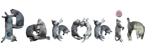 猫フォント-ぱろりん