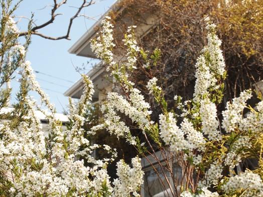 my-garden 037