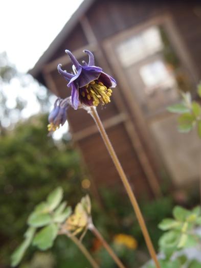 my-garden 010 (4)