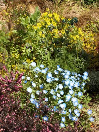 my-garden 036 (3)