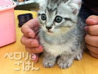 chibisuke02.jpg