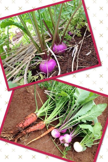 畑のお野菜