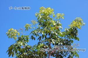この記事「プーケットのゴム園」の写真 (369-366)