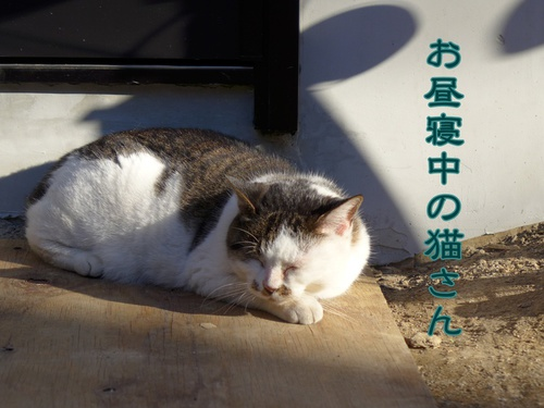 初!村猫発見!
