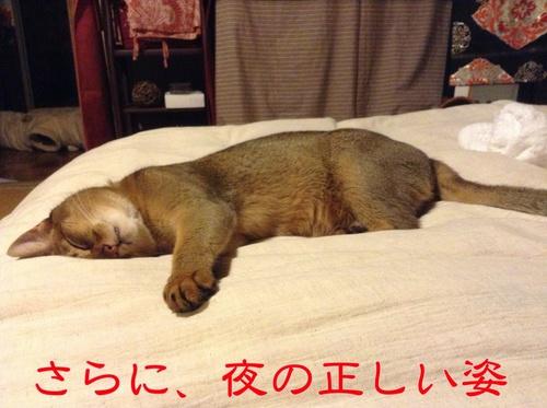 むふふ、かわいい寝顔v
