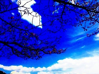 s-運動公園_桜