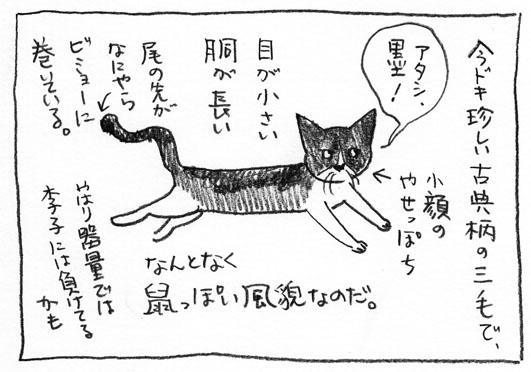 2_古典三毛