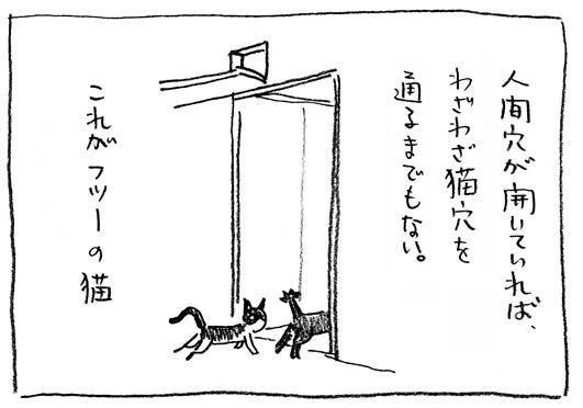 2_普通猫