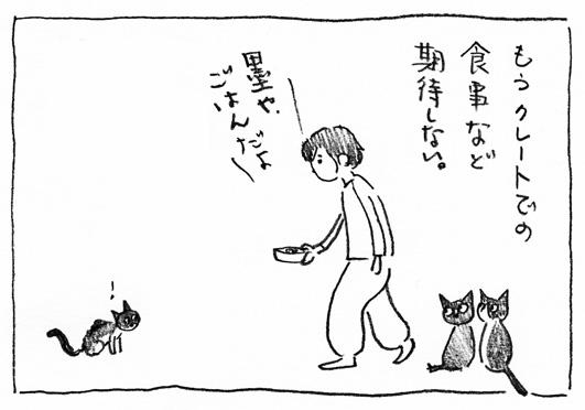 1_ごはんだよ