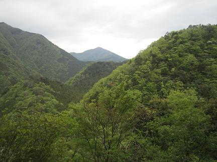 若葉茂る山々