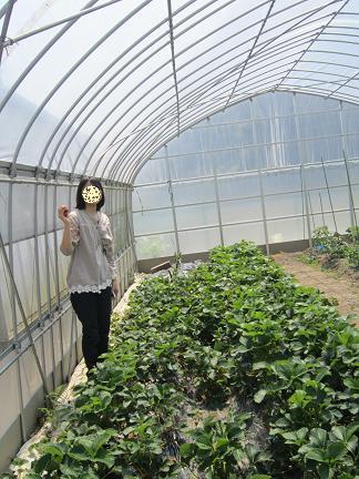 イチゴ摘み