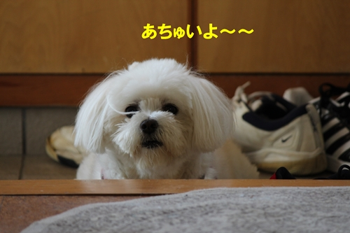IMG_0445a.jpg