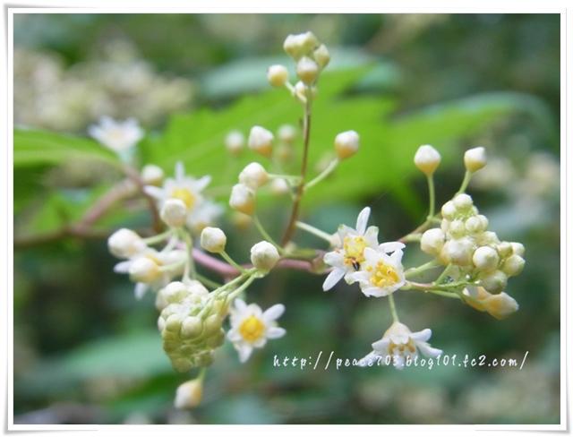 吉和冠山の花004
